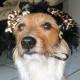 Karnevals-Hund